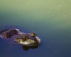 カエル メダカ 食べる 飼育