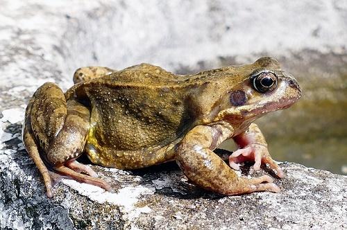 カエル 幼生 成体