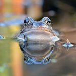 蛙は触っても噛まない?目に触れると失明?