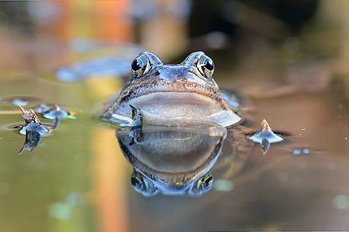 蛙 噛まない 触る 失明