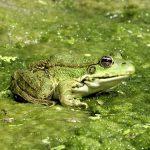 沖縄カエル冬眠について