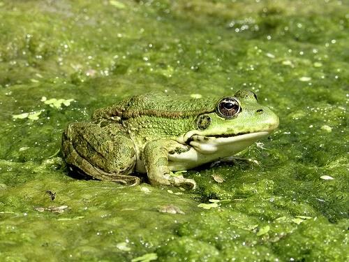 カエル 沖縄 冬眠