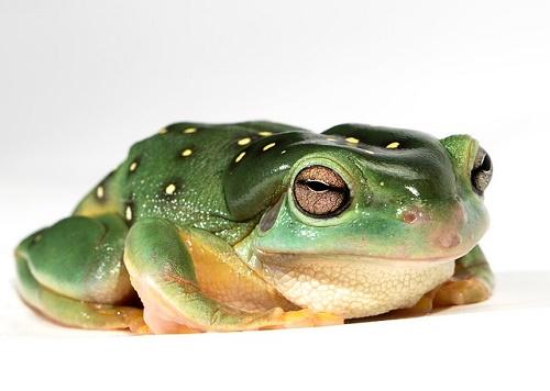 カエル 性格