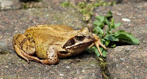カエル 飼育 水槽 床材