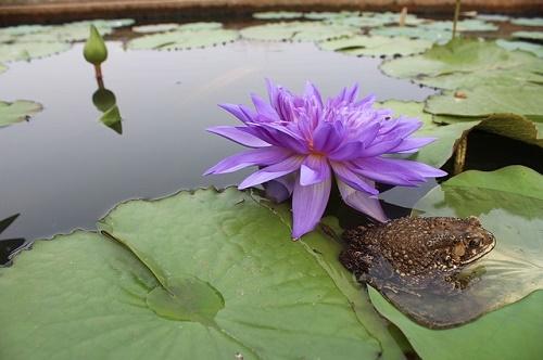 カエル 飼育 植物