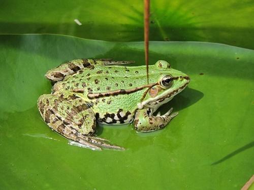 茨城 カエル 種類