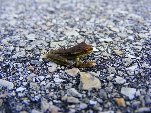 カエル 黒 日本 小さい 1cm