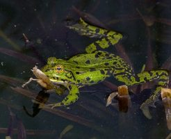 カエル 犬 寄生虫