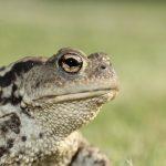 カエルの病気とレッドレッグ と痙攣 について