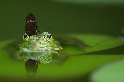 カエル 目 白