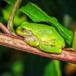 カエルの皮膚や耳の構造