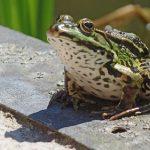 カエルの飼い方と最適な温度について