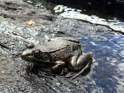 カエル 病気 カビ