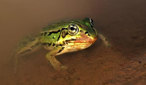 カエル 触る 火傷 体温