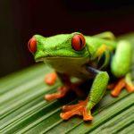 カエルの目の構造とは