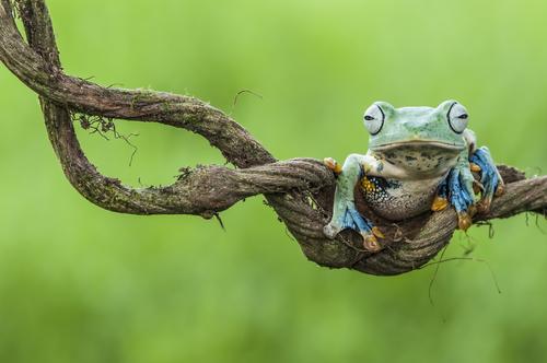 カエル 性別 変わる