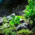 カエルの飼育でテラリウムや植物は