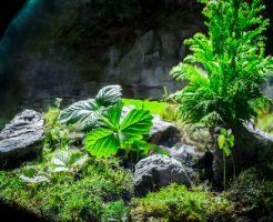 カエル テラリウム 植物