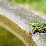 カエルとメダカは混泳可能か?