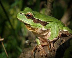 カエル 神経伝達速度