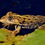ヒキガエルの飼育と水について!