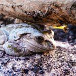 カエルが卵を産む時期