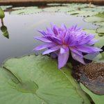 カエルの飼育に用いる植物