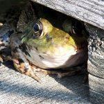 カエルの寄生虫の種類