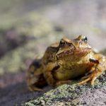 カエルの体の色って?皮膚が湿っている時と乾燥の時の違いとは?