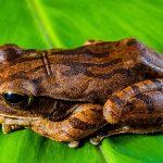 オタマジャクシからカエルへの育て方を知ろう!