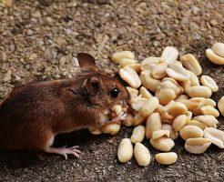カエル ネズミ 捕食