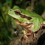 カエルの口につく粘膜は病気?